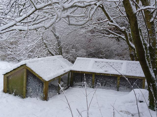 hedgepigs - winter quarters Jan'13