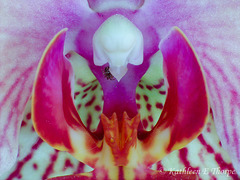 Orchid and Friend Macro