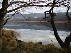 gbw - Llyn Dinas with trees