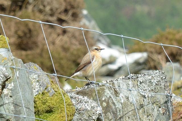 Welsh bird.  Identification anyone?!