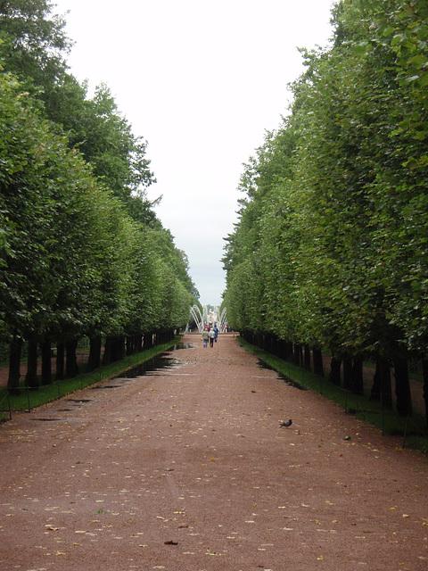 Allee in Peterhof