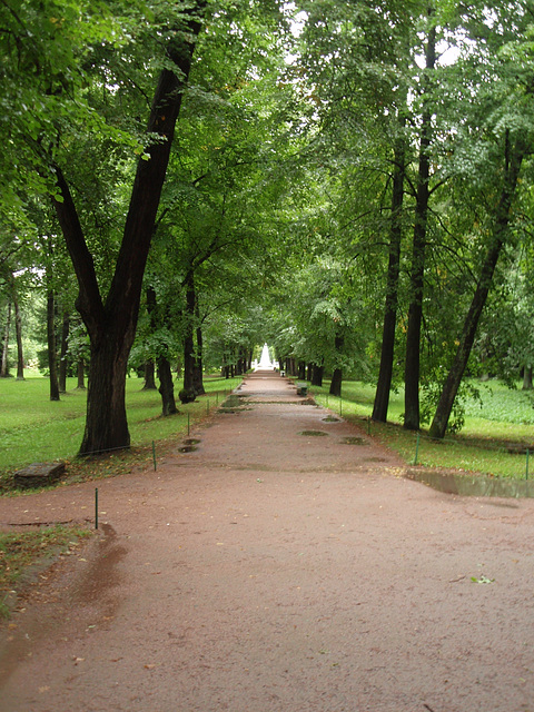 """Peterhof -- Allee und Springbrunnen """"Pyramide"""""""