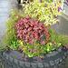 CF - more garden