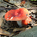 Red mushrooms 2