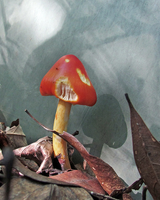 A Munchy Mushroom