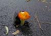Mushroom Popping Through Asphalt