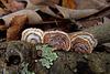 Bracket Fungus and Lichen