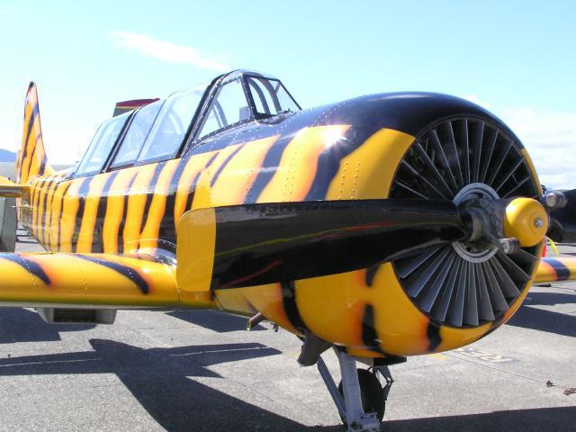 Yak-52 (p8222701)