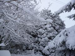 gbww - Jan 2013 snowy trees