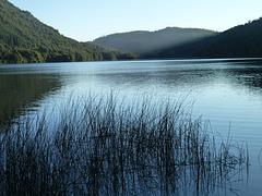 Plantas en el lago