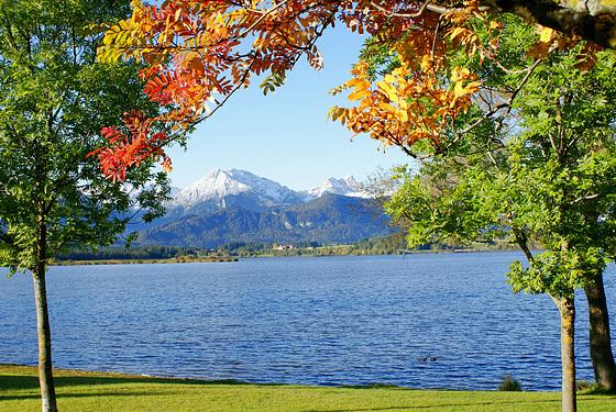 Bunte Blätter am Hopfensee. ©UdoSm