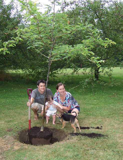 Henry's Tree - Success!