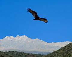 Four Peaks (AZ)