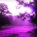 Purple Light