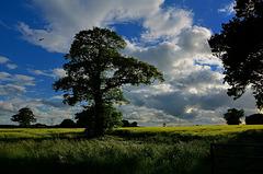 Blustery summer evening, Staffordshire