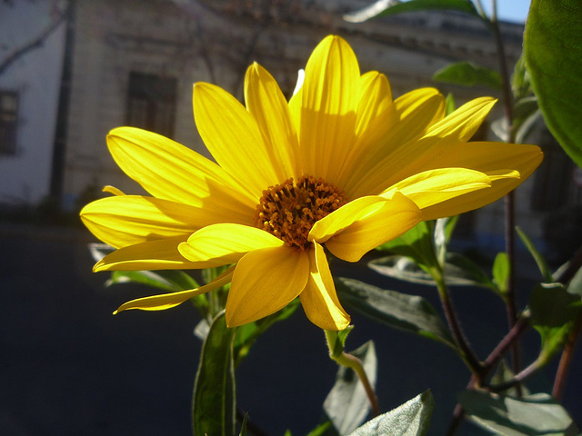 Pequeña flor de lado