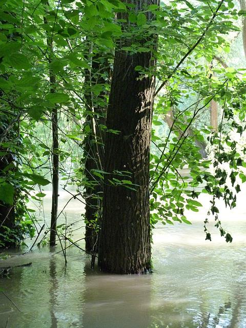 Ich wünsche allen, die weitaus schlimmer vom Hochwasser betroffen sind, viel Kraft und Zuversicht