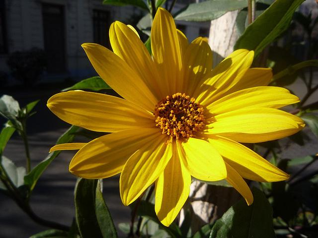 Pequeña flor nos mira