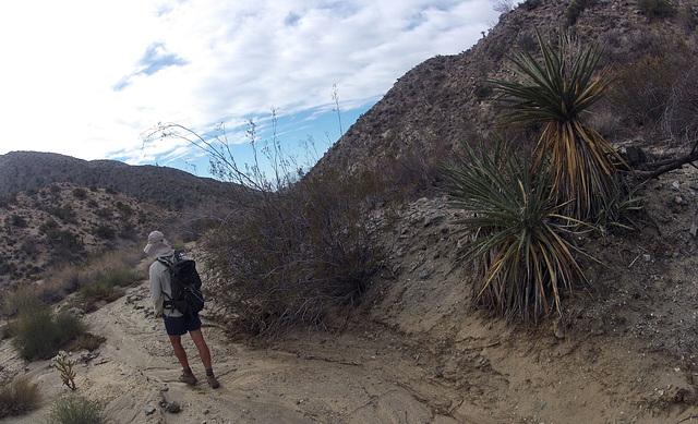 Long Canyon (01647)