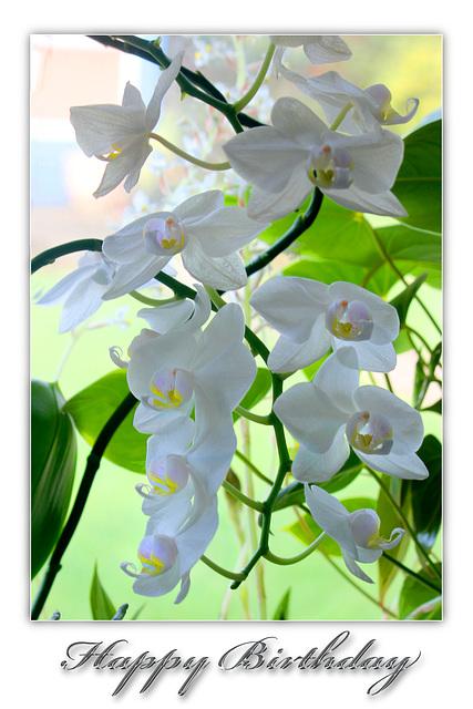 White orchids - Happy Birthday