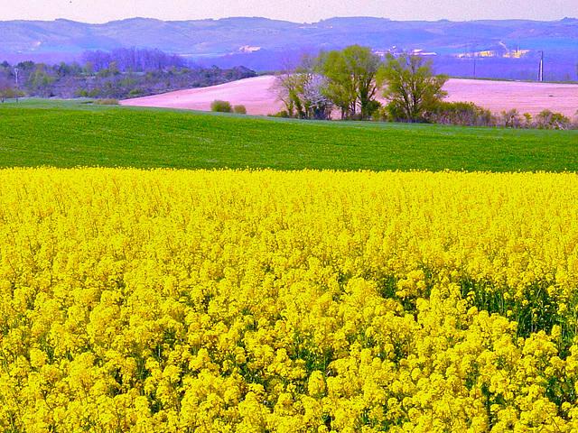 Piemont Pyrénéen