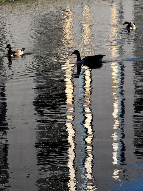Grand Union Canal Reflection 3