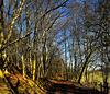 Winter in Raven's Clough Wood, Brierfield.