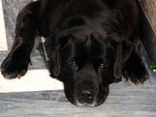Baco 1998 - 2013