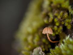Micro Mini Mushroom