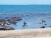 Altona Beach scene