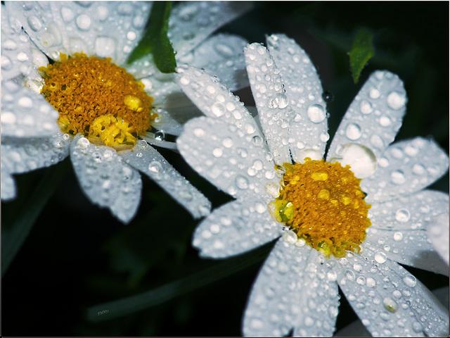 Rainy Sunday Afternoon