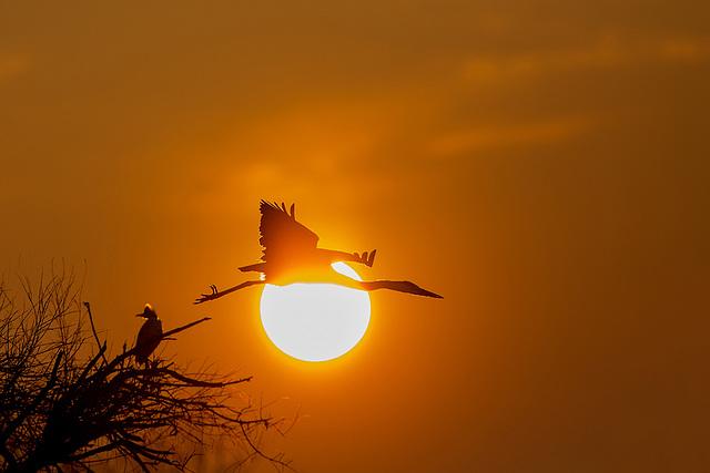 Le héron et le soleil