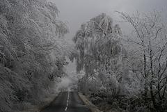 gbww - frosty trees