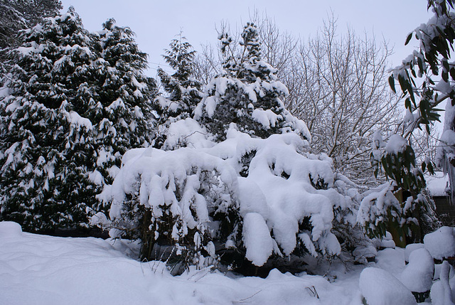 gbww - garden snow
