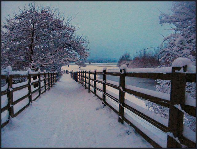 snow in Aristotle Lane