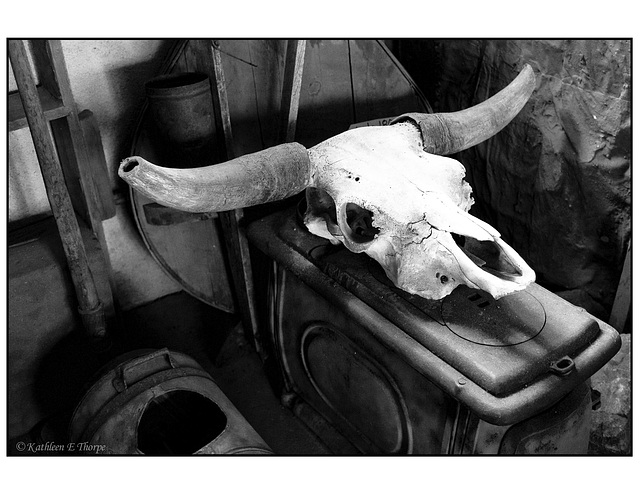 Trading Post steer skull black and white