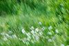 Daisies in a daze.......
