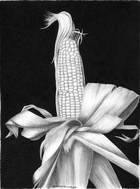 """""""Corn"""", graphite, 11x14in"""