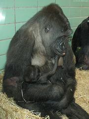 Mutasi mit Baby Mawenzi (Wilhelma)