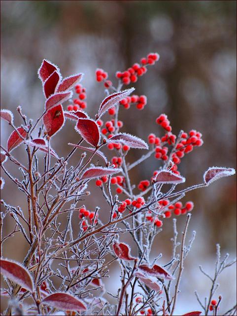 cold reds