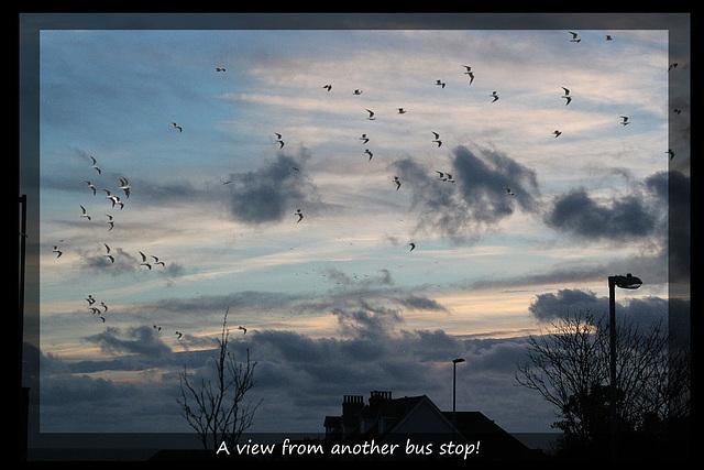 Gulls flock over Edinburgh Road, Seaford - 21.1.2014