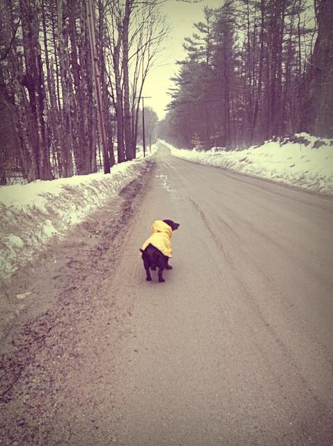 rainy days and brisk walks