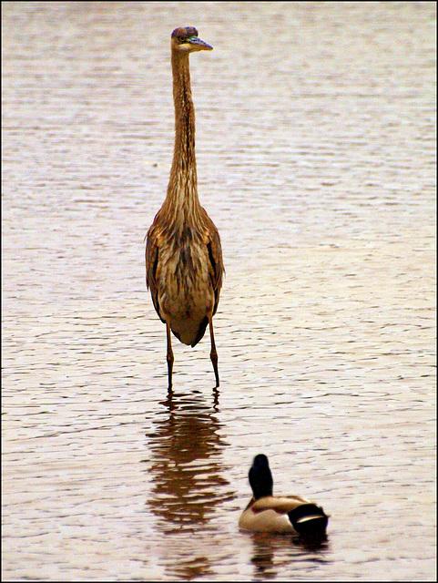 avian standoff