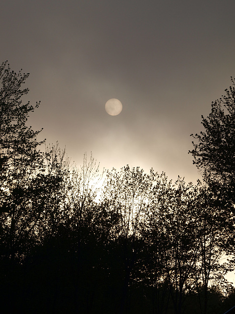 hazy morn