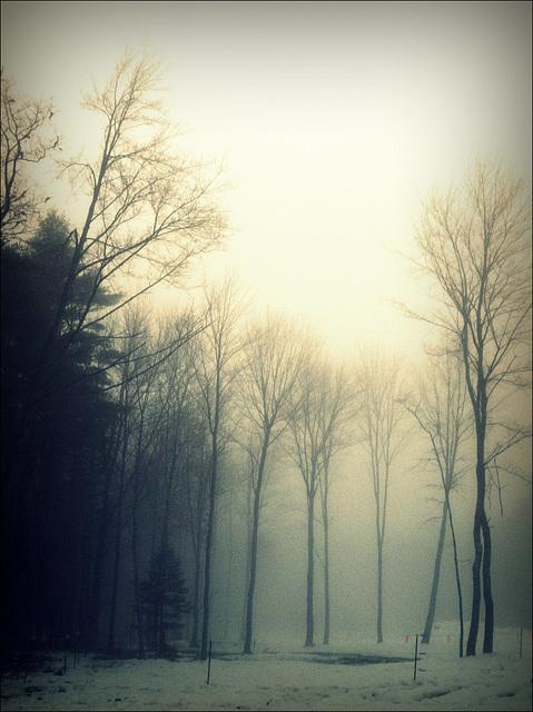 foggy mornin' in the hollow
