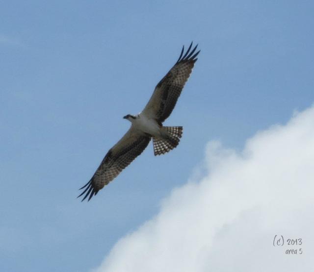 Juvenile flight -