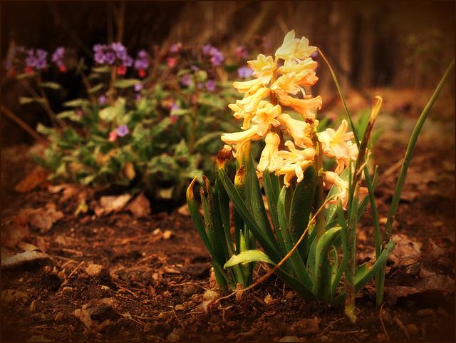 spring proper