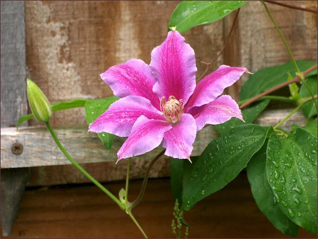 June showers bring pretty flowers