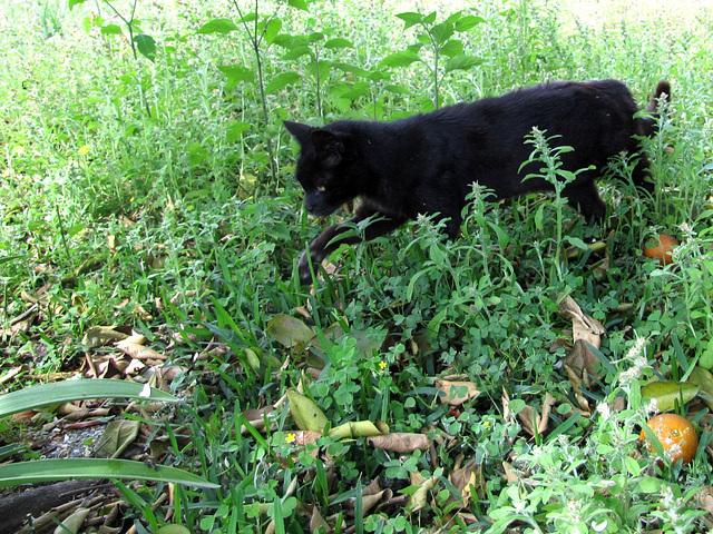 Making my way through the jungle-