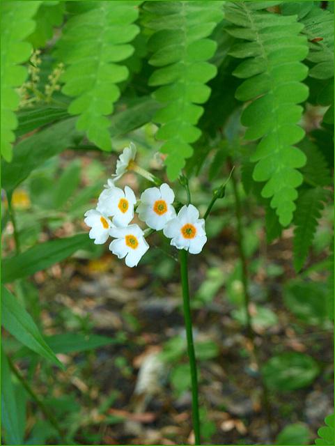 in the fern jungle